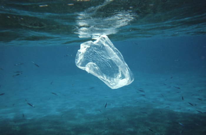 The impact of plastic on our oceans