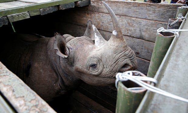 Eight of 14 rhinos die after move to Kenyan national park