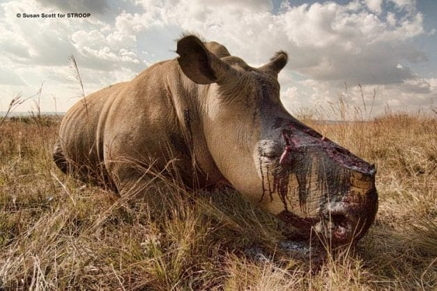 366 rhino poachers arrested in Kruger National Park since start of 2018