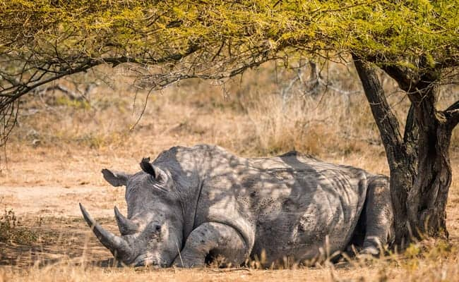 These Rhino Poachers Deserve the Harshest Punishment