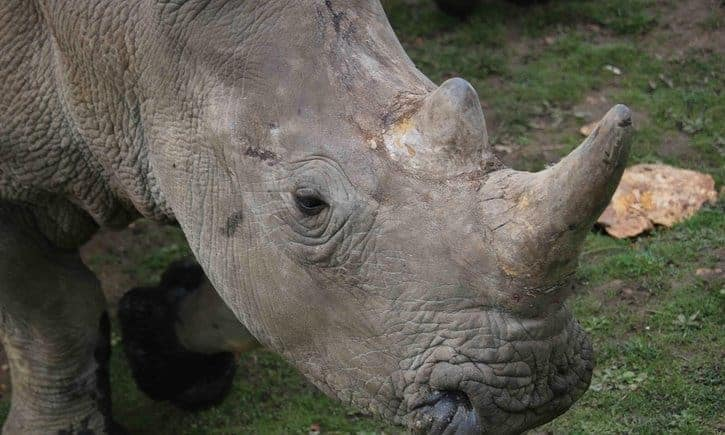 Rhino shot dead by poachers at French zoo