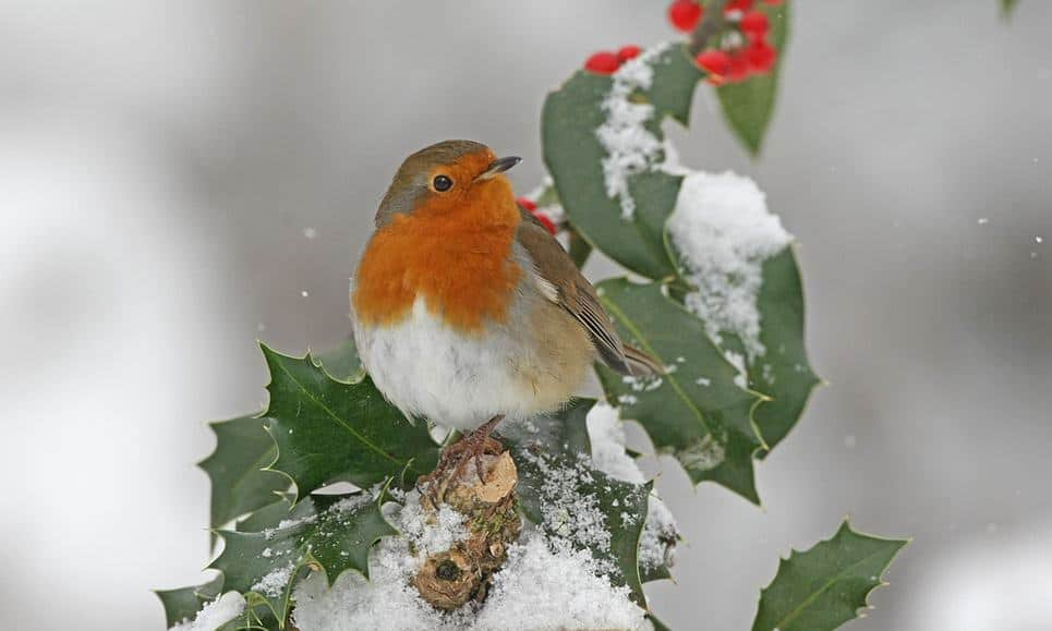 How the robin's red breast could be the key to colours that never fade