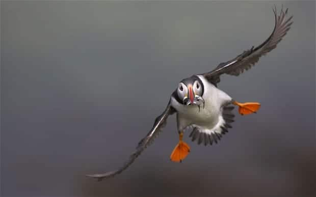 Image result for flying bird gif pic