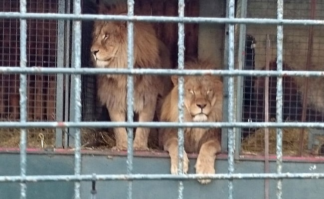 Success! Scotland Bans Wild Animals in Traveling Circuses
