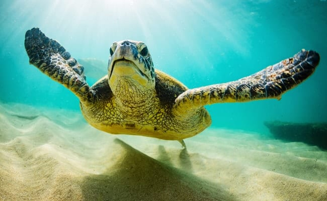 How the world's largest cruise line can stand up for sea turtles