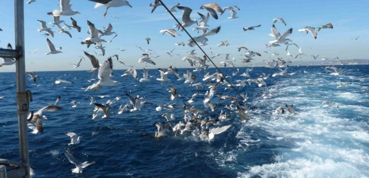 No escape – Unsustainable European fishing practices harm seabirds