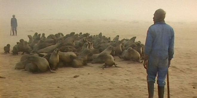 The Bloodshed of Fur Seals Has Begun in Namibia