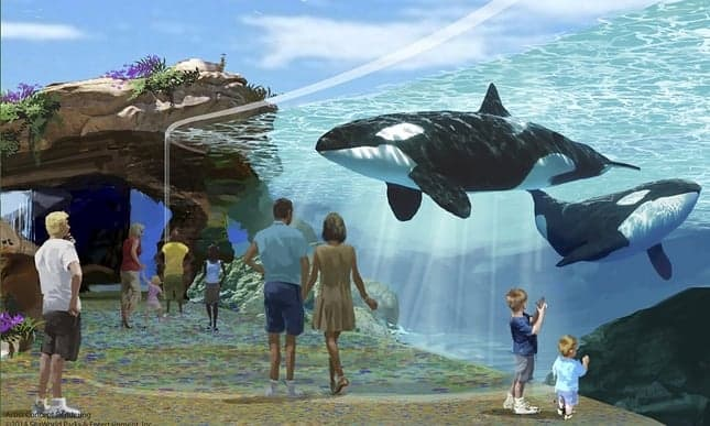 POLL: Should captivity for all killer whales be banned?