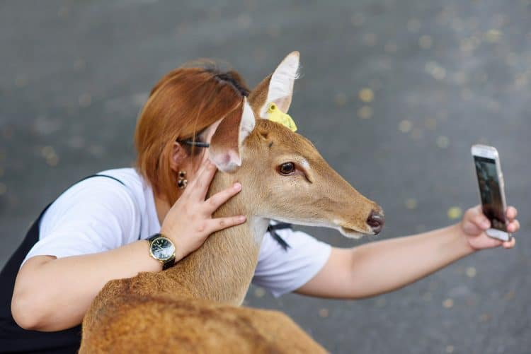 Costa Rica Takes Action Against Wild Animal Selfies!