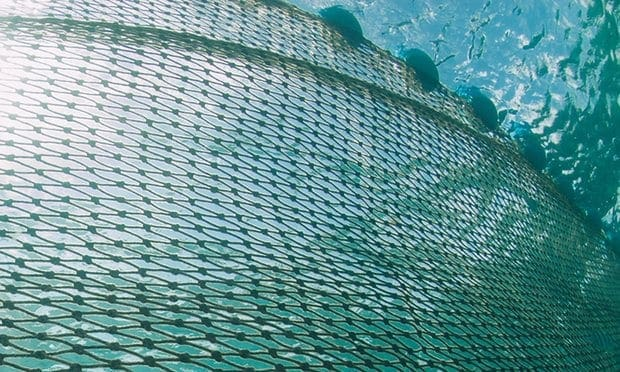 POLL: Should shark nets be used to protect swimmers?
