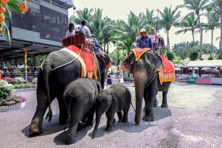 Petition: Shut Down Elephant Attractions at Nong Nooch Tropical Gardens Where Baby Elephant Collapsed!
