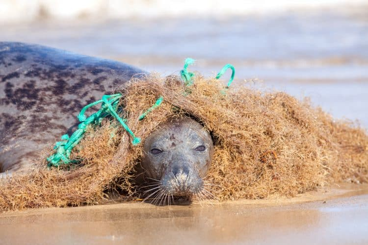 Petition: Stop Ghost Fishing Gear From Killing Hundreds of Marine Animals a Year!