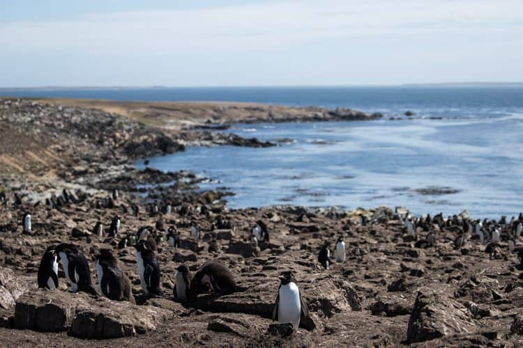 Petition: Protect Pebble Island And Its Penguins!