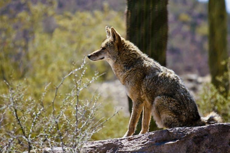 Arizona Bans Wildlife Killing Contests!