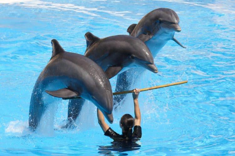 Petition: Send Dolphins at Dubai Dolphinarium to a Sanctuary!