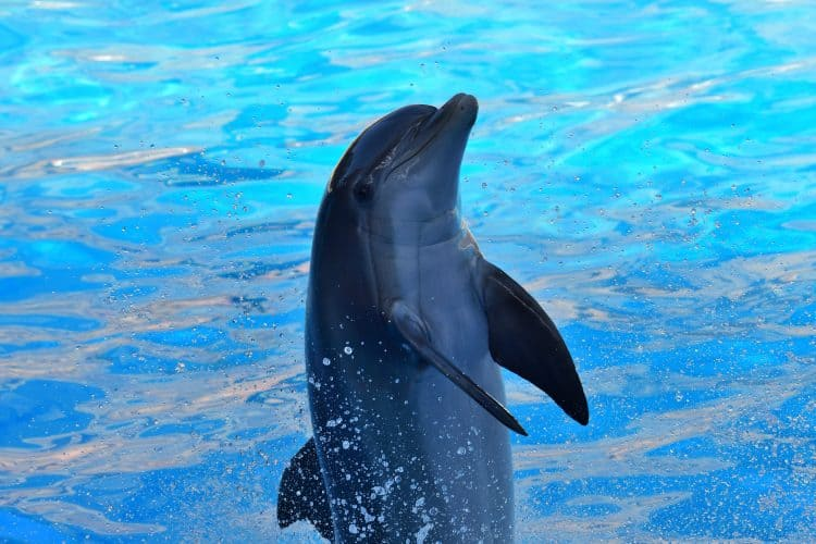 Petition: Send Dolphinaris Arizona Dolphins to a Real Sanctuary!