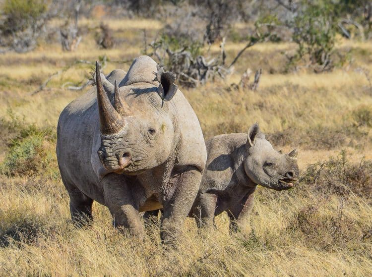 Petition: Protect Endangered Black Rhino Habitat in Tanzania!