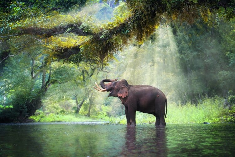 Petition: Stop Thailand From Exporting Elephants!
