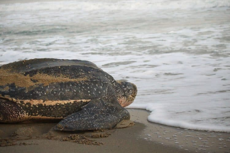 Petition: Demand Justice and Protection for Abused Sea Turtle!