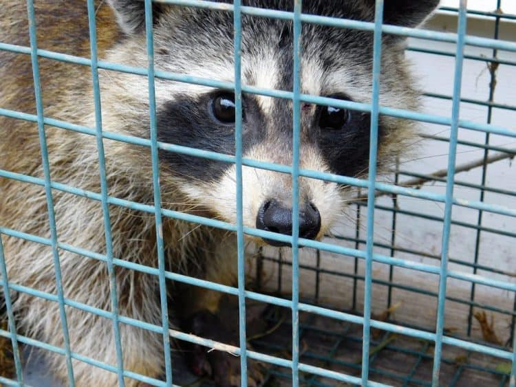 Petition: Ask South Dakota to End Program that Pays Children to Kill Animals