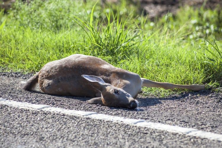 Petition: Demand The Termination of Cop That Repeatedly Ran Over a Suffering Deer