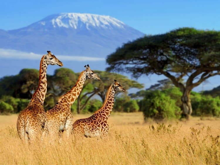 CITES Finally Adding Regulations to Protect Giraffes!