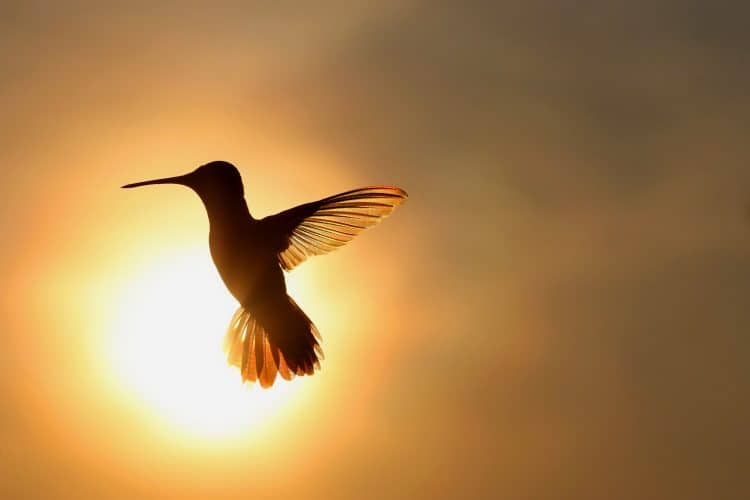 Petition: Protect the Newly Discovered Blue-Throated Hillstar Hummingbird From Extinction!