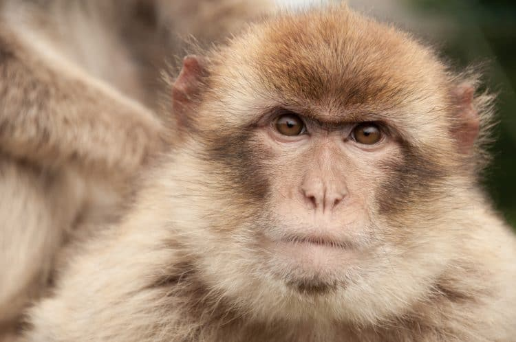 Petition: Stop eBay From Allowing The Sale of Endangered Stuffed Animals