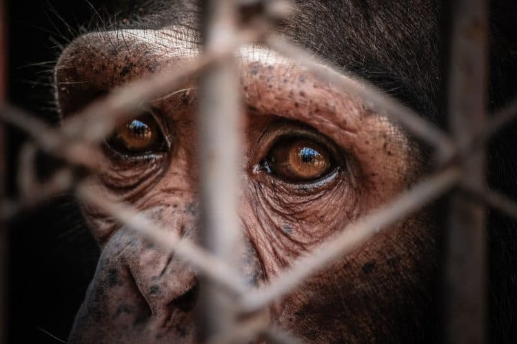 Petition: Ask Myrtle Beach Safari to Stop Exploiting Animals on Social Media!