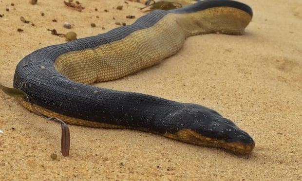 British man dies after bite from sea snake off Australia's north coast