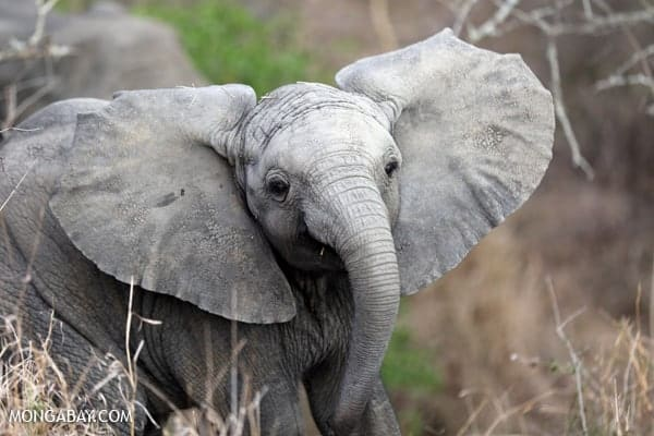 Elephants rejoice: China to end ivory trade