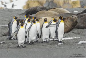 Video: South Georgia and the Falkland Islands