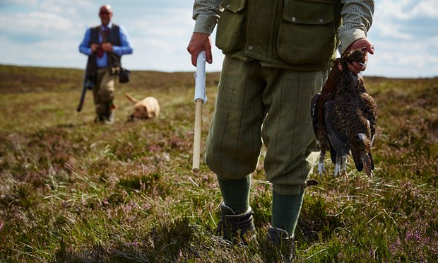 POLL: Should subsidies to grouse shooting estates be stopped?