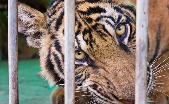 POLL: Should the use of animals in circuses be banned?