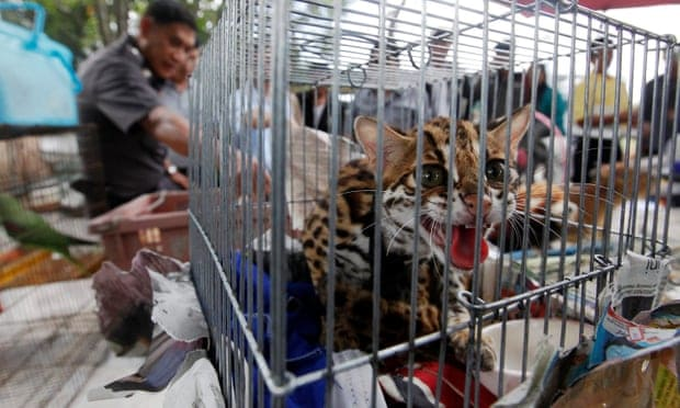 Thousands of wild animals seized in smuggling crackdown