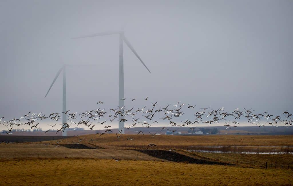 POLL: Should the wind turbine farm project in Eilot be stopped?