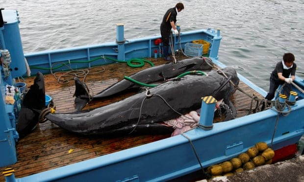 POLL: Should Japan be sanctioned for resuming commercial whaling?