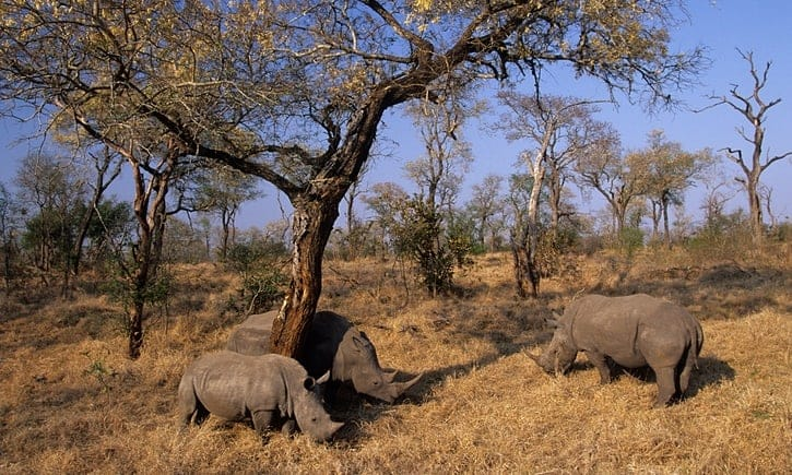 POLL: Should Africa's poachers be shot on sight?