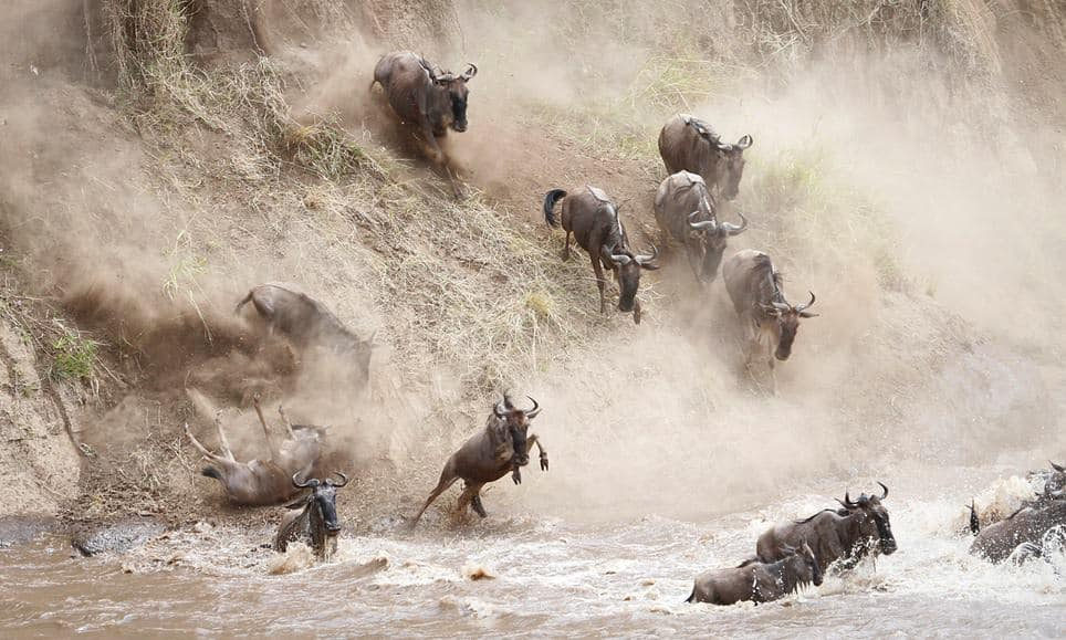 How to watch the great migration of animals from Serengeti