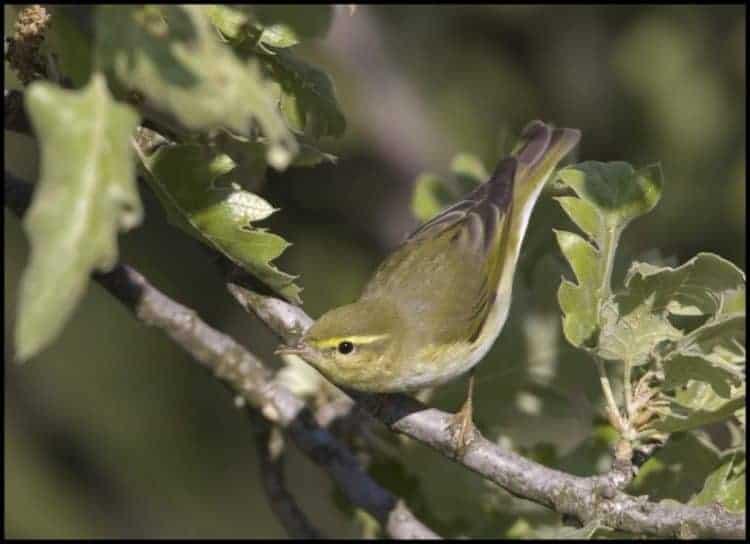 The special plight of Trans-Saharan migratory birds