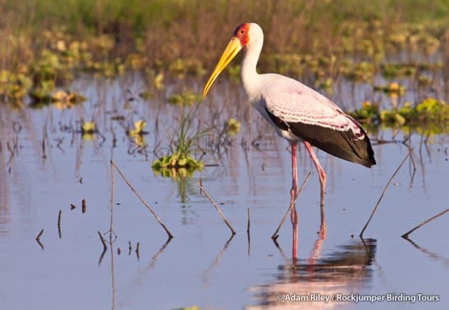 Serengeti birdlife in spring